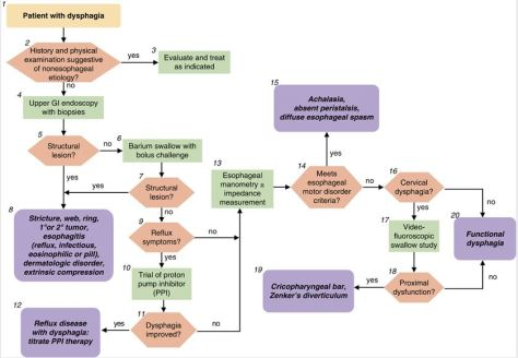 dysphagia-diagnostic-algorithm