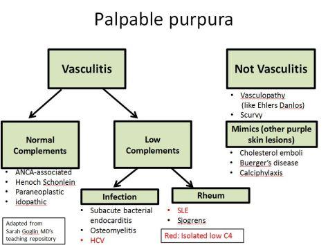 Palpable Purpura