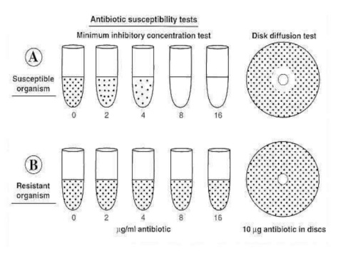 minimum-inhibitory-concentration-7-728